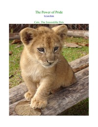 online magazine - PRIDE in the world of BIG cats