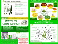 online magazine - Zija Flyer with Comp Plan